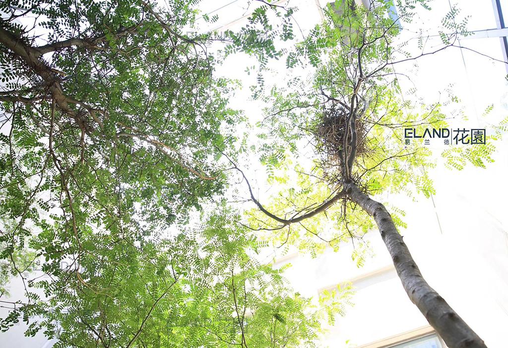 易兰德景观莱斯办公中庭项目_图片4