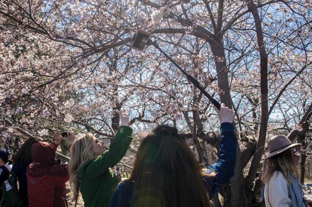在城市中,我们身边的树木花草为何会赋予我们生活?